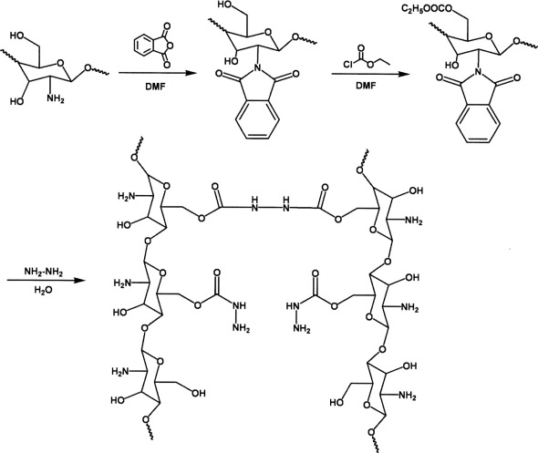 Synthesis of a new chitosan derivative and assay of escherichia coli download high res image 184kb fandeluxe Choice Image