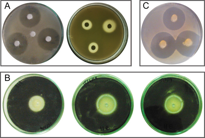 Methods for in vitro evaluating antimicrobial activity: A