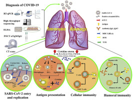 Molecular Immune Pathogenesis And Diagnosis Of Covid 19 Sciencedirect
