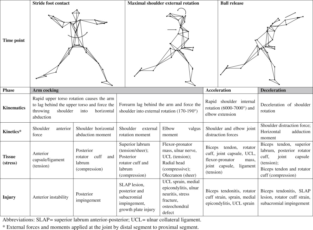 baseball pitching kinematics joint loads and injury prevention