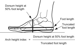 foot size to height