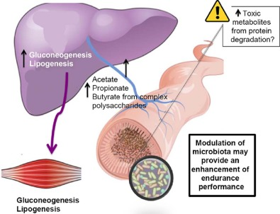 Endurance exercise and gut microbiota: A review - ScienceDirect