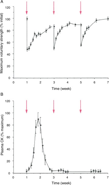 Biomechanical Response Of Skeletal Muscle To Eccentric Contractions