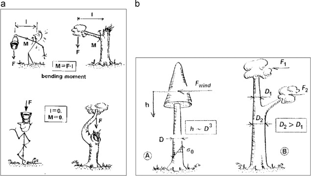 diagram of poplar tree wiring diagram general helper  diagram of poplar tree technical diagrams