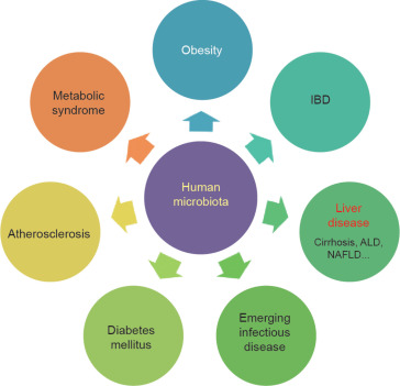 The Human Microbiota in Health and Disease - ScienceDirect