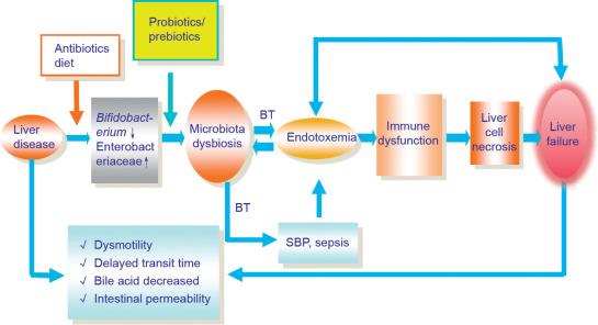 The Human Microbiota in Health and Disease - ScienceDirect