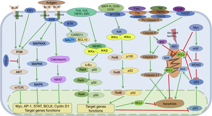 Critically dysregulated signaling pathways and clinical