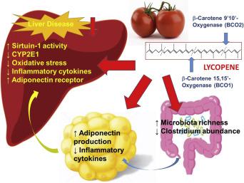 Tomato lycopene prevention of alcoholic fatty liver disease
