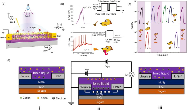 Two-dimensional materials for synaptic electronics and