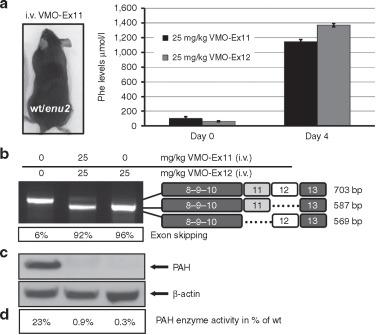 A Sensitive Assay System To Test Antisense Oligonucleotides