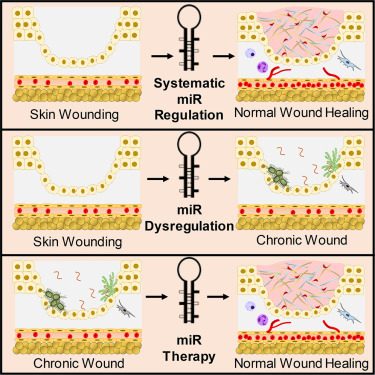 Microrna As Therapeutic Targets For Chronic Wound Healing