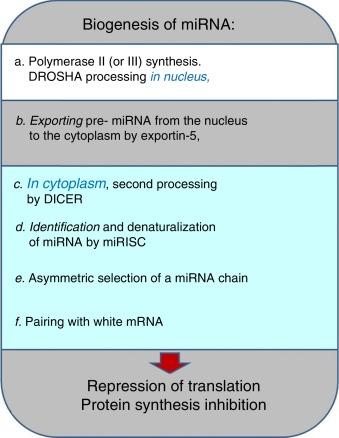 Resumen de secuenciación de la próxima generación de diabetes