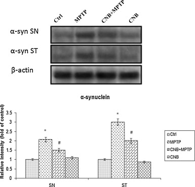 In silico identification of potent inhibitors of alpha-synuclein