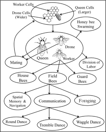 Computing With The Collective Intelligence Of Honey Bees