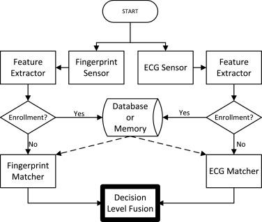 ECG and fingerprint bimodal authentication - ScienceDirect
