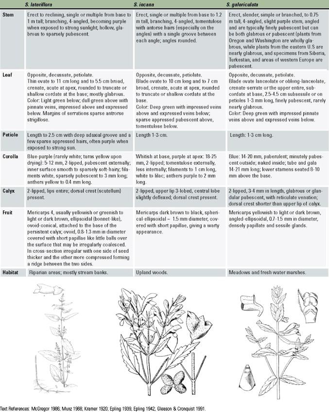 Skullcap Scutellaria Lateriflora L An American Nervine Sciencedirect