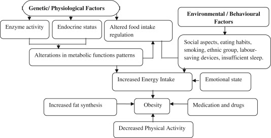 Health Consequences Of Obesity In The Elderly  Sciencedirect Download Fullsize Image Help On Making A Business Plan also How To Write A Business Essay  Essay For English Language
