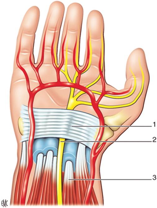 Hierbas para vasos sanguíneos rotos