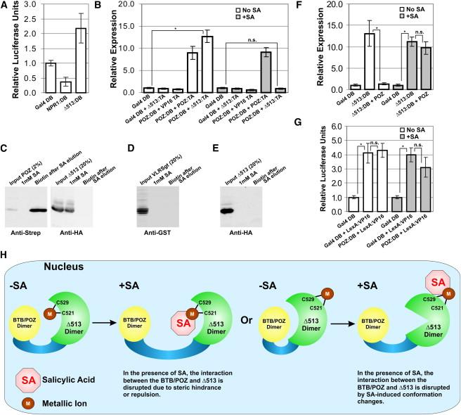 Arabidopsis Npr1 Protein Is A Receptor