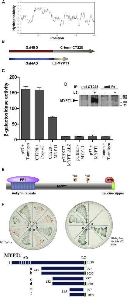 Chlamydia trachomatis CT228 Membrane Protein Inclusion mnO0Pyv8Nw