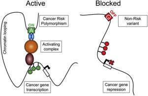 Linkage of dna methylation quantitative trait loci to human cancer download full size image malvernweather Choice Image