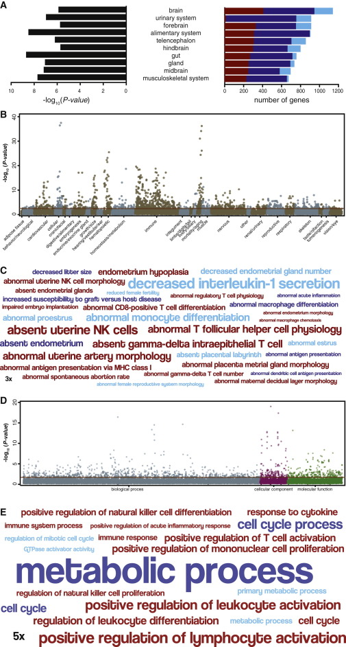 Ancient Transposable Elements Transformed the Uterine Regulatory