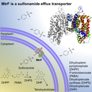 Structure And Function Of Neisseria Gonorrhoeae Mtrf Illuminates A