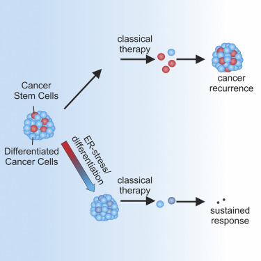 Er Stress Induced Differentiation Sensitizes Colon Cancer Stem Cells To Chemotherapy Sciencedirect