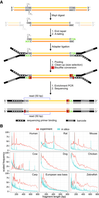 Differential dna methylation analysis without a reference genome download high res image 648kb malvernweather Choice Image