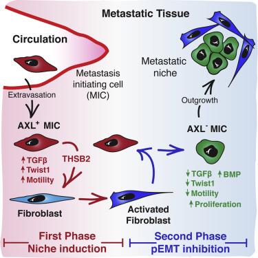 Mesenchymal Cancer Cell-Stroma Crosstalk Promotes Niche