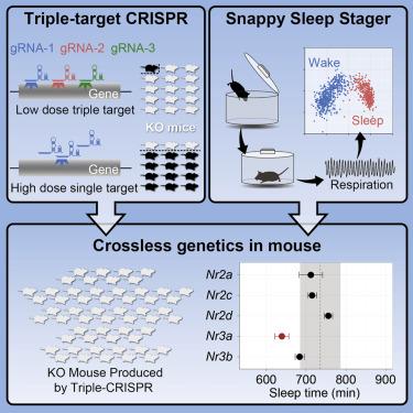 Mammalian Reverse Genetics without Crossing Reveals Nr3a as a Short