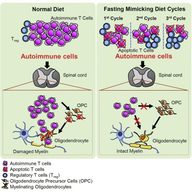 does diet effect ms