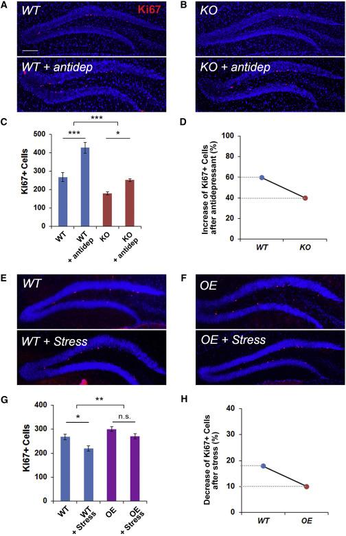 miR-17-92 Cluster Regulates Adult Hippocampal Neurogenesis