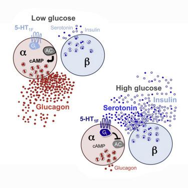 adv cura de diabetes tipo 1