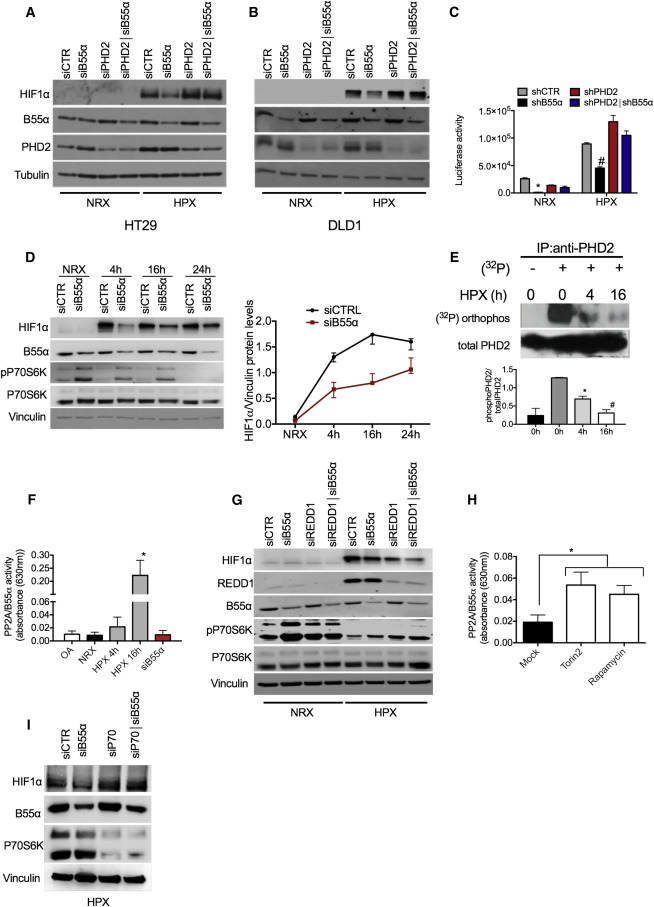 The mTOR and PP2A Pathways Regulate PHD2 Phosphorylation to