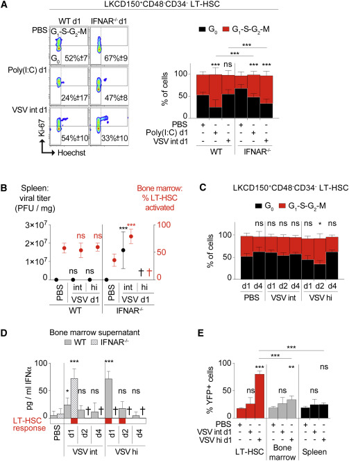 Systemic Virus Infections Differentially Modulate Cell Cycle