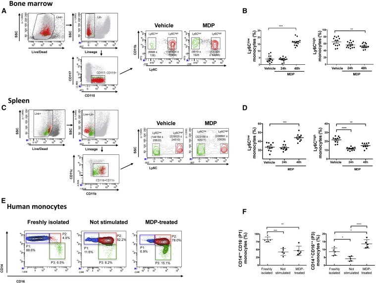 Triggering of NOD2 Receptor Converts Inflammatory Ly6Chigh