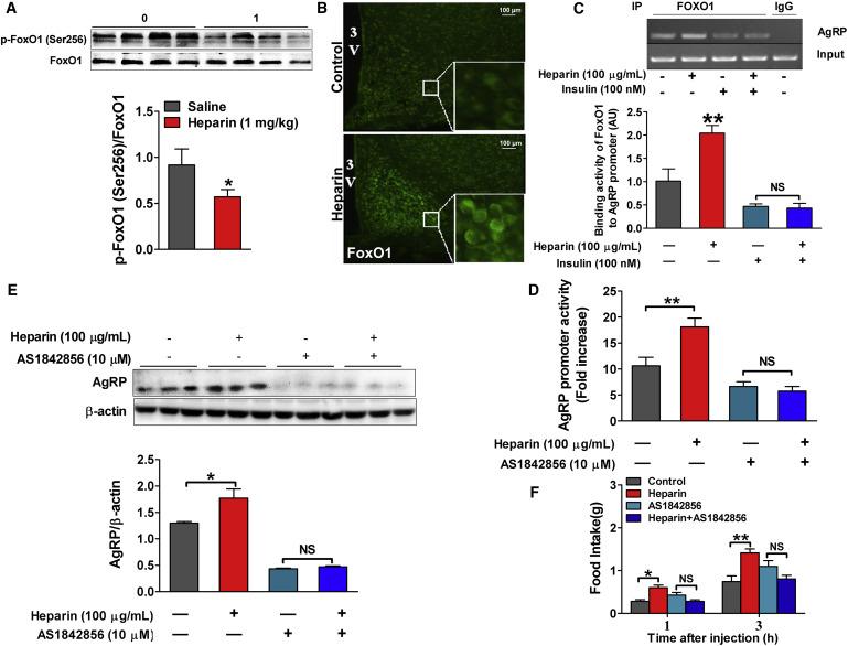 Heparin Increases Food Intake Through Agrp Neurons Sciencedirect