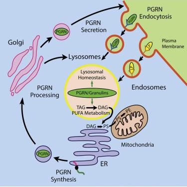 Lipidomic and Transcriptomic Basis of Lysosomal Dysfunction