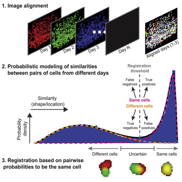 Tracking the Same Neurons across Multiple Days in Ca2+