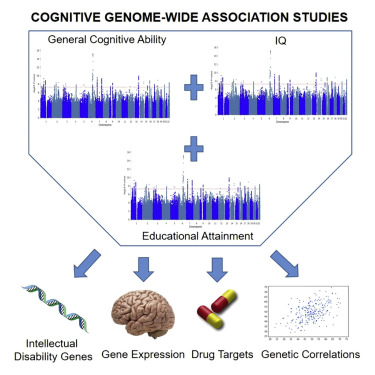 Genetic Convergence Between Cognition >> Large Scale Cognitive Gwas Meta Analysis Reveals Tissue Specific