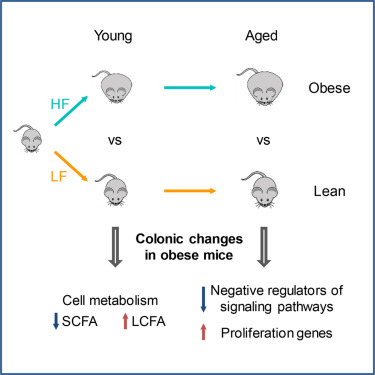 Transcriptome And Dna Methylome Analysis In A Mouse Model Of Diet Induced Obesity Predicts Increased Risk Of Colorectal Cancer Sciencedirect