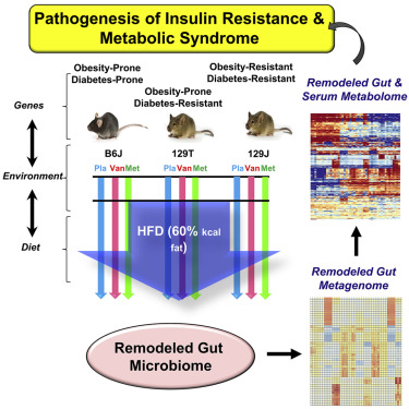 Diet, Genetics, and the Gut Microbiome Drive Dynamic Changes in