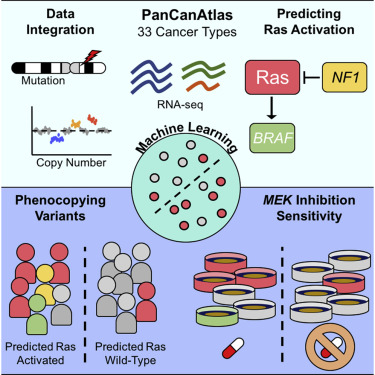 Machine Learning Detects Pan Cancer Ras Pathway Activation In The Cancer Genome Atlas Sciencedirect