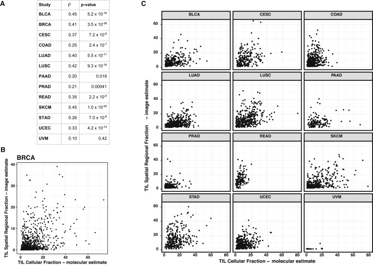 Spatial Organization and Molecular Correlation of Tumor