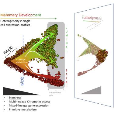Single-Cell Transcriptomes Distinguish Stem Cell State