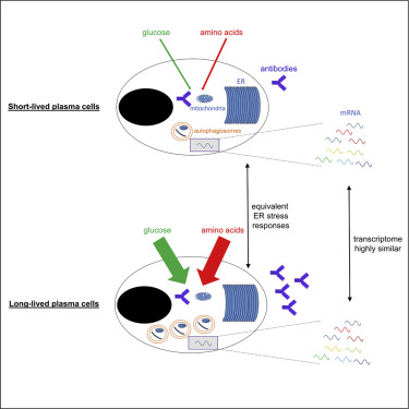 Metabolic and Transcriptional Modules Independently