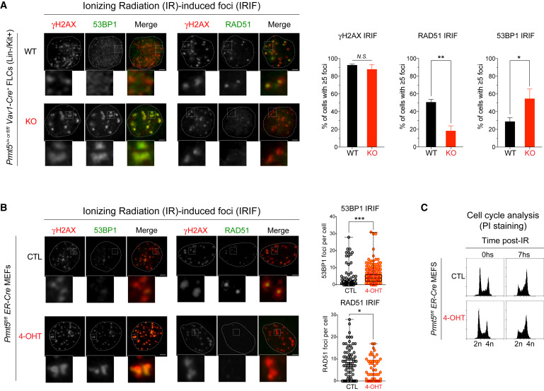 PRMT5 Regulates DNA Repair by Controlling the Alternative