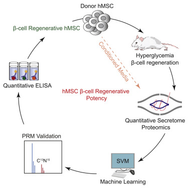 Quantitative Proteomics Evaluation of Human Multipotent Stromal Cell