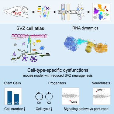 Single-Cell Transcriptomics Characterizes Cell Types in the